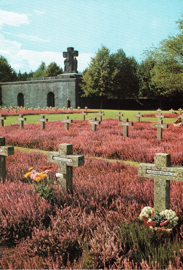Paarse heide op de Soldatenfriedhof te Lommel