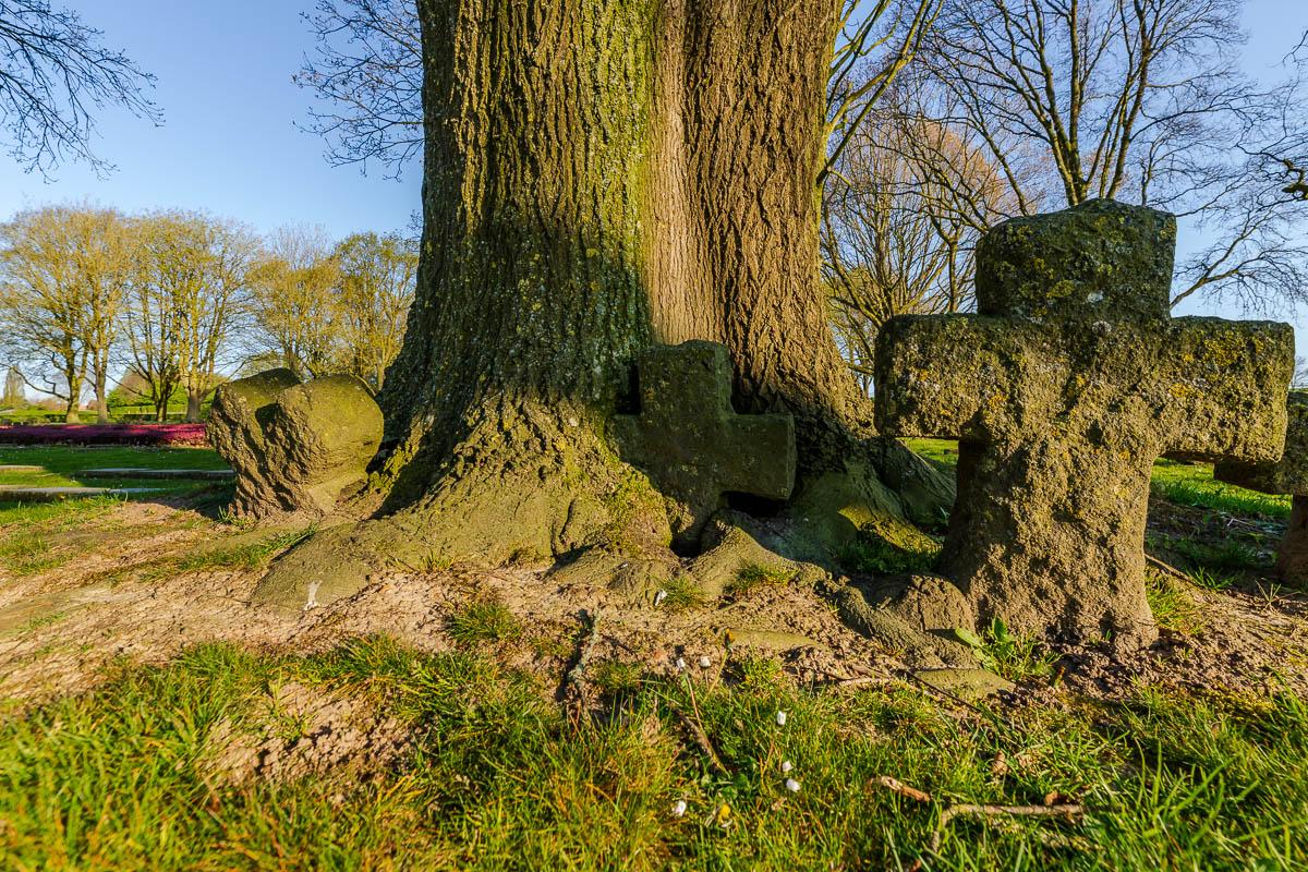 Kruisen worden verzwolgen door boom